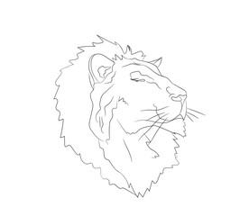 lion portrait, lines, vector
