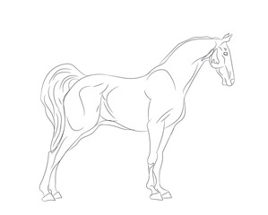 horse, lines, vector