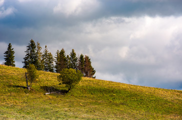 trees on the grassy hillside on an overcast day. beautiful nature scenery