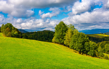 beautiful grassy meadow on hillside in mountains. row of trees on the edge of a hill under the gorgeous cloudy sky