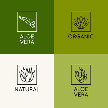 Vector logo design template and icon in linear style with aloe vera plant