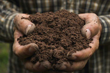 closeup hand of person holding abundance soil for agriculture or planting peach. Wall mural