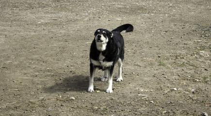 Funny attentive dog