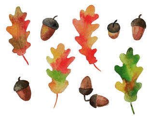Watercolor collection of oak leaves and acorns.