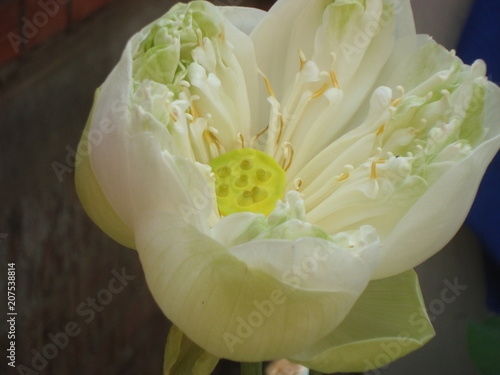 Fleur Blanche Stock Photo And Royalty Free Images On Fotolia Com