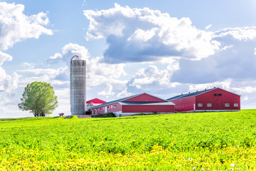 Landscape view of farm in Ile D'Orleans, Quebec, Canada with red harvest or crop storage silo building, green field of grass, dandelion flowers and cloudy, cloud sky