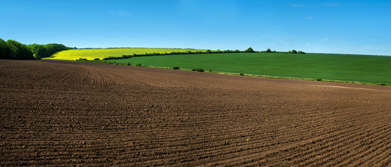farm field lines of arable land and rapeflowerfield landscape Wall mural