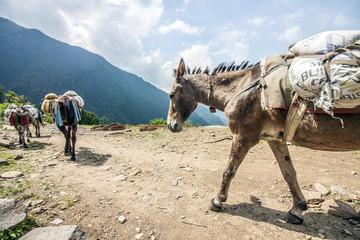 Esel-Karawane nahe dem Himalaya