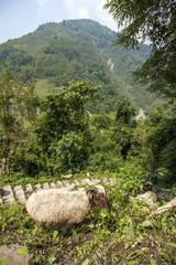 Landschaft Nepal Ziegen