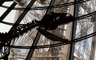 A dinosaur fossil is on display at the Eiffel tower, in Paris