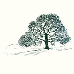Oak tree silhouette, hand drawn doodle, sketch in pop art style, black and white vector illustration