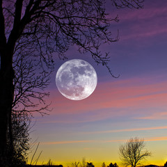 Great composition of super Moon on colorful sunset with trees and clouds as background.