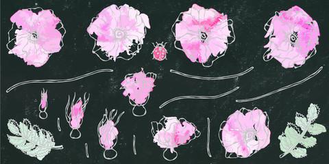 Black Board Background. Watercolor Wild Rose Pink Flower. Dog Rose, Briar Leaf. Botanical Painting. Realistic Hand Drawn Illustration. Savoyar Doodle Style.