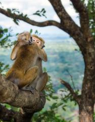 Hugged monkeys.