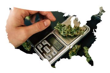 Cannabis Bud in the United State of America, Legal Marijuana in America. Flowers of cannabis marijuana weed lie on a dark background top view