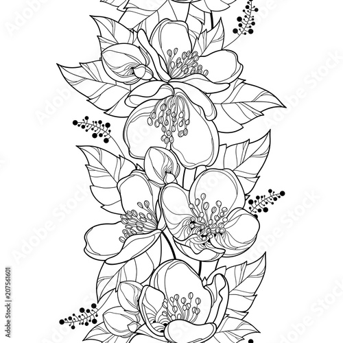 Vector Seamless Pattern With Outline Jasmine Flower Bunch Bud And Ornate Leaf In Black On