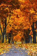 Beautiful autumn city landscape, russia, park, golden color