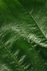 Plant with water droplets
