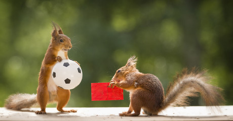red squirrels are  holding a red card