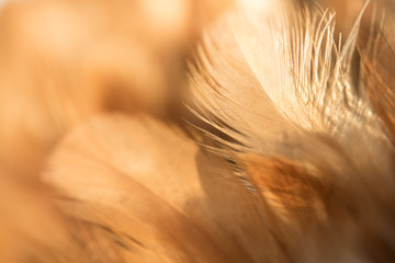 Bird and chickens feather texture for background Abstract,blur style and soft color of art design.for mobile case