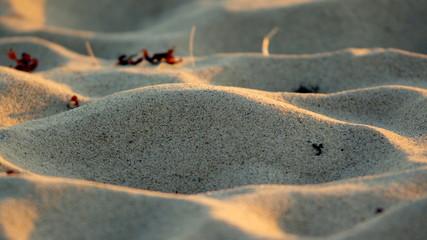 Pofalowany od wiatru piasek na bałtyckiej plaży