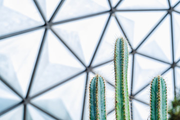 Close up of green  cactus in the Geodesic Dome Glasshouse, Nature abstract wallpaper background. Selective focus.