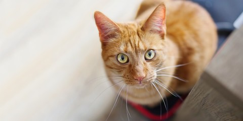 Cute ginger cat looking curious above to the camera.