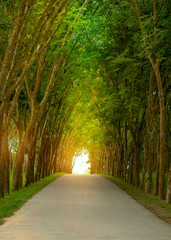 Landscape of straight road under the trees, the famous Longtien green tunnel.