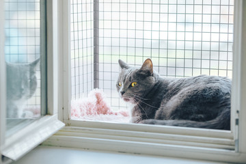 Safety Window gray cat. A special enclosure for cat safety is installed on the window and cat sit there