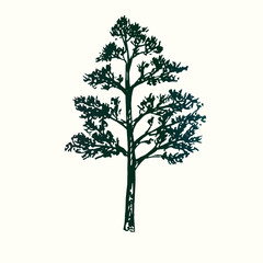 Pine tree silhouette, hand drawn doodle sketch, black and white vector illustration