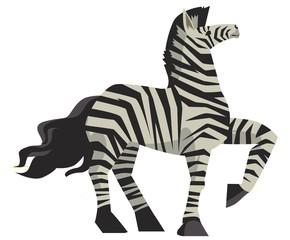 beautiful standing zebra