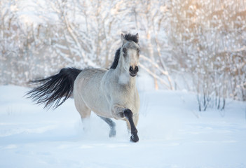 Stallion in the winter forest
