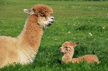 Mama + Baby