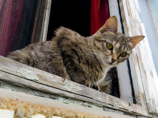 A homeless cat lies on the window of a destroyed house