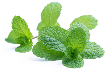 fresh raw mint leaves isolated on white