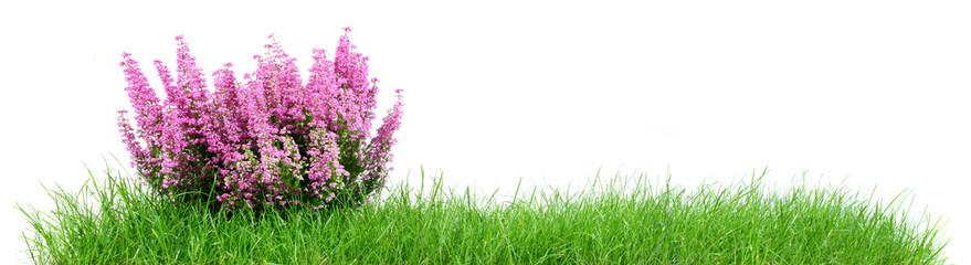 Wiese mit Pflanze - Panorama