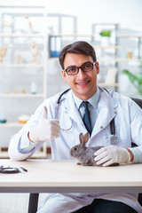 Vet doctor checking up rabbit in his clinic