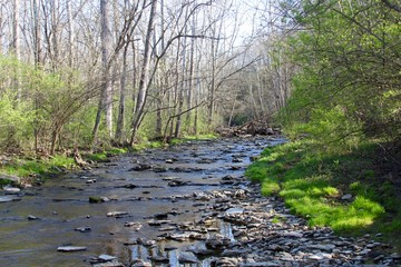 The creek in the woods of the park on a sunny spring day.