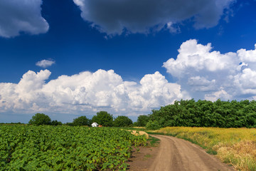 Vibrant fields panorama with white clouds and blue sky in countryside