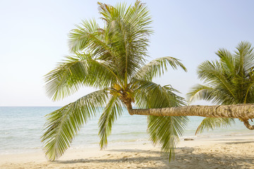Tropical palm tree with green leaves over the sea water on the sand beach. Thailand
