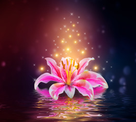 Wall Mural - Pink Lilies flower on water reflection