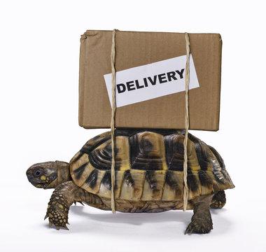 El envio lento del paquete.