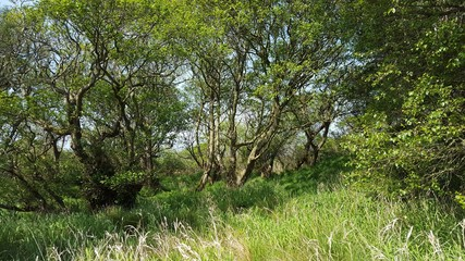 Trees and undergrowth in forest