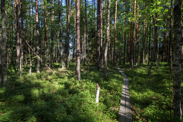 Duckboards in a lush and verdant forest at the Puurijärvi and Isosuo National Park in the Pirkanmaa and Satakunta regions of Finland on a sunny day in the summer.