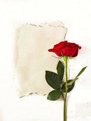 Vintage paper with space for text and red rose on white background. Flat lay, top view.