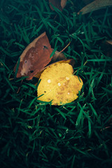 Autumn leaves are lying on the grass