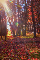 Picturesque autumn forest, abandoned park, sun rays, sunrise. Golden fall in forest