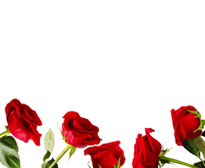 Frame of fresh red roses on white background with copy space