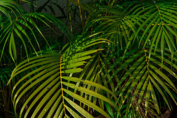 Leaves in tropical rainforest