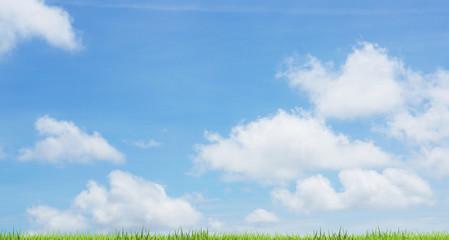 blue sky green grass 3d rendering background